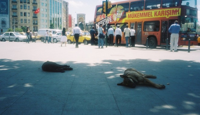 street-dogs-in-taksim-square